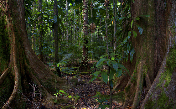 Daintree Rainforest tours