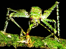 Daintree Rainforest insects